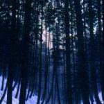 Elder Woods