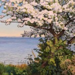 St. Georges Bay (apple tree in bloom)