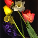 Spring 2006 8x10 2006