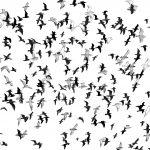 Avian Pandemonium