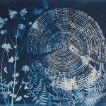 """Ghost Trees  with Columbine, cyanotype on paper, 20""""x20"""", 2018"""